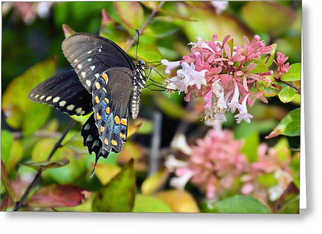 Pink Queen Greeting Card by JAMART Photography