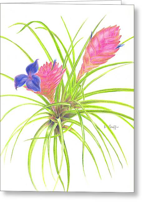 Pink Quill Greeting Card