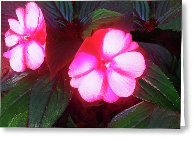 Pink Red Glow Greeting Card