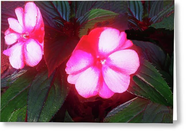 Pink Red Glow Greeting Card