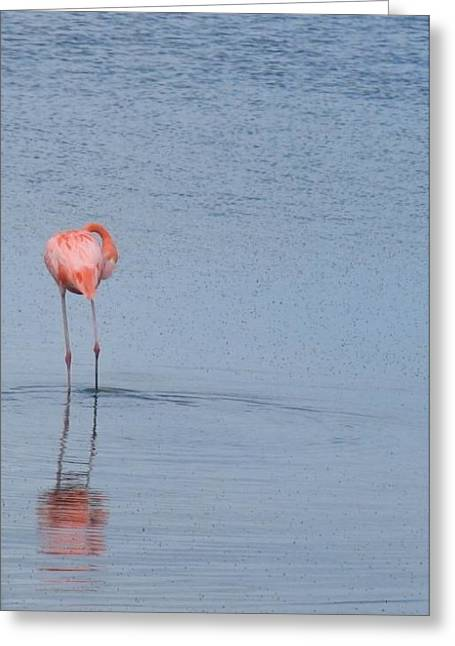 Pink Reflections Greeting Card by Arry Murphey