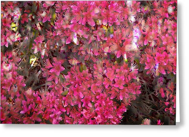 Pink Rhododendron Greeting Card by Thom Zehrfeld