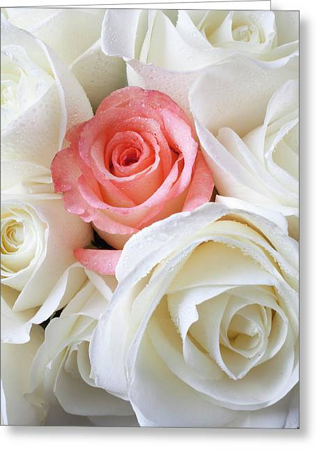 Pink Blossoms Greeting Cards - Pink rose among white roses Greeting Card by Garry Gay
