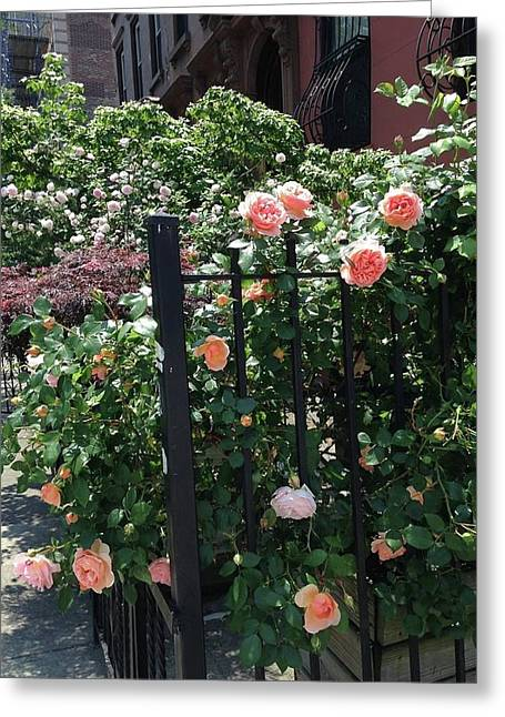 Pink Rose Fence Greeting Card by Carolyn Quinn