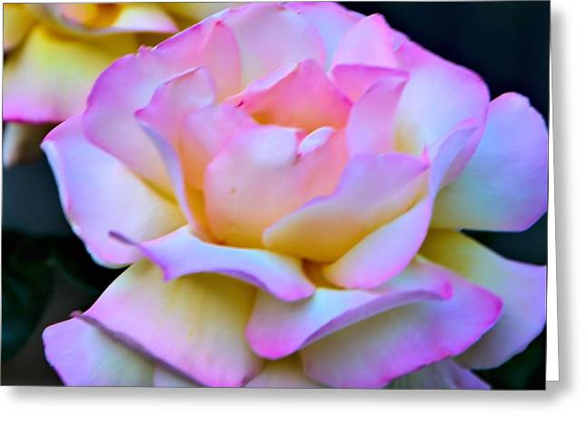 Pink Rose Greeting Card by Josephine Buschman