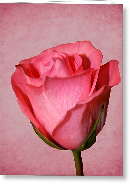 Greeting Card featuring the photograph Pink Rose by Judy Vincent