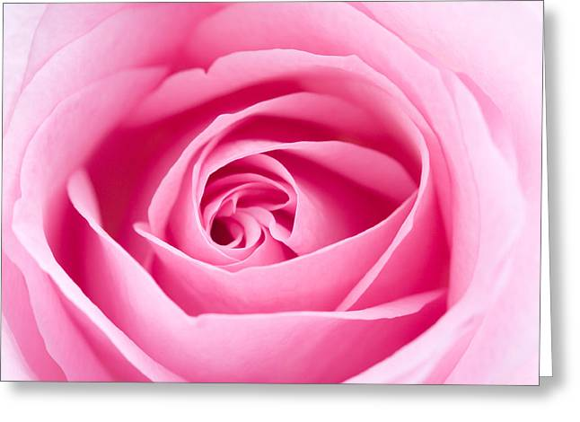 Recently Sold -  - Rose Petals Greeting Cards - Pink rose Greeting Card by Kati Molin