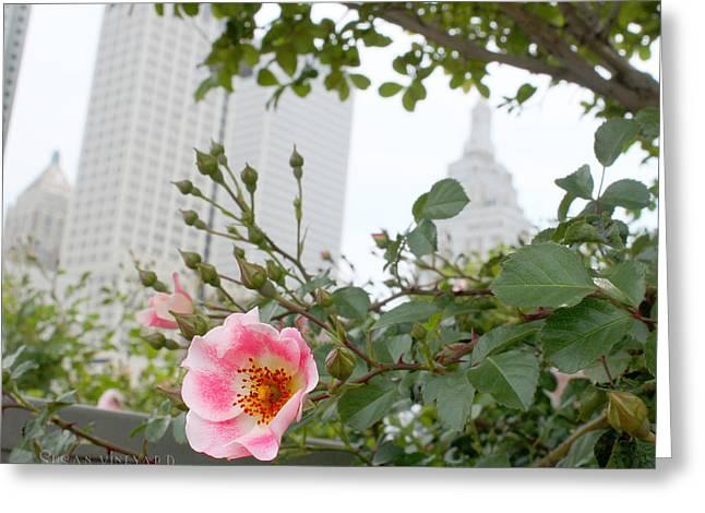 Pink Rose Of Tulsa Greeting Card
