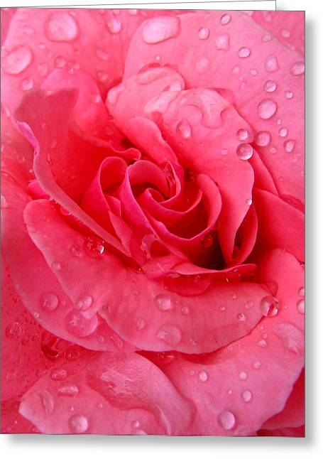 Greeting Card featuring the photograph Pink Rose by Patricia Januszkiewicz