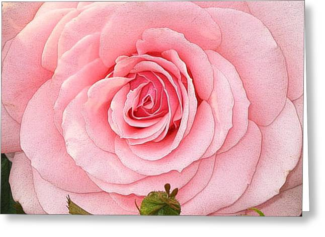 Pink Rose - Rose Rose Greeting Card by Nature and Wildlife Photography