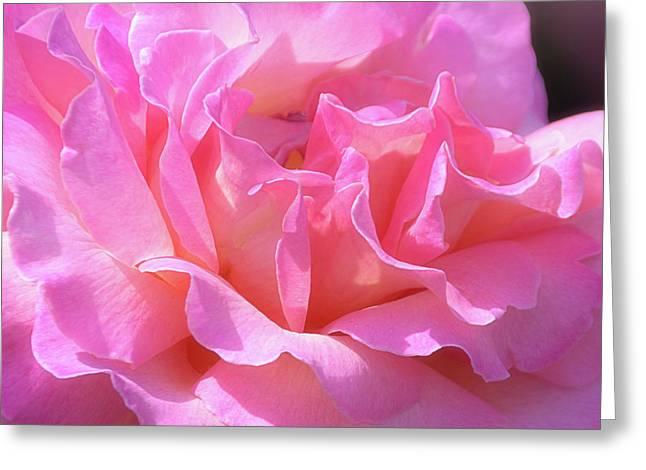 Pink Rose Ruffles Greeting Card by Julie Palencia