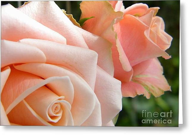 Pink Roses Greeting Card by Amanda Heavlow