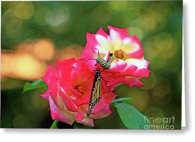Pink Roses And Butterfly Photo Greeting Card