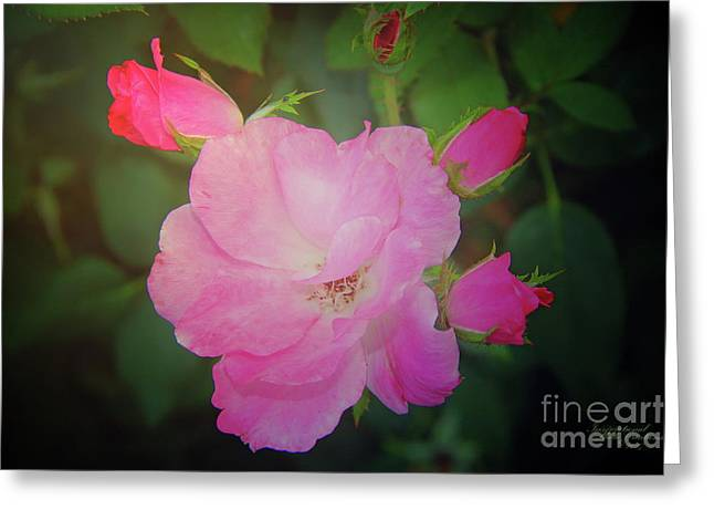 Pink Roses  Greeting Card by Inspirational Photo Creations Audrey Woods