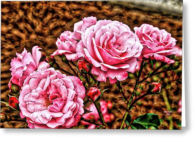 Pink Roses Greeting Card by Dennis Baswell