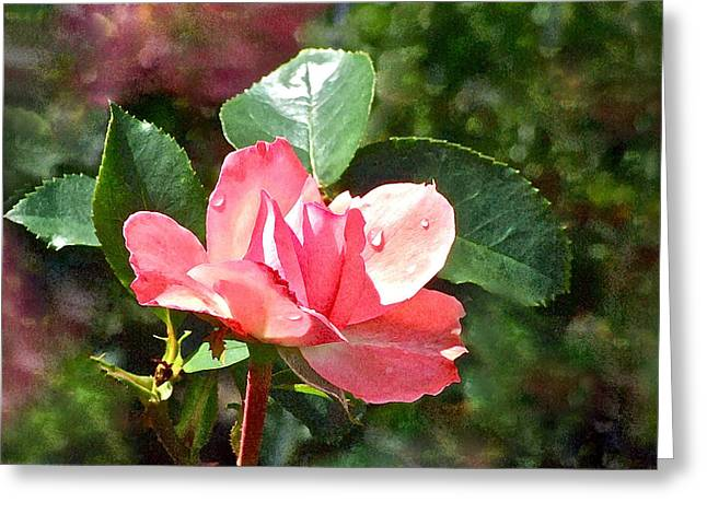 Pink Roses In The Rain 2 Greeting Card by Janis Nussbaum Senungetuk