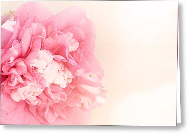 Greeting Card featuring the photograph Pink Ruffled Camellia by Cindy Garber Iverson