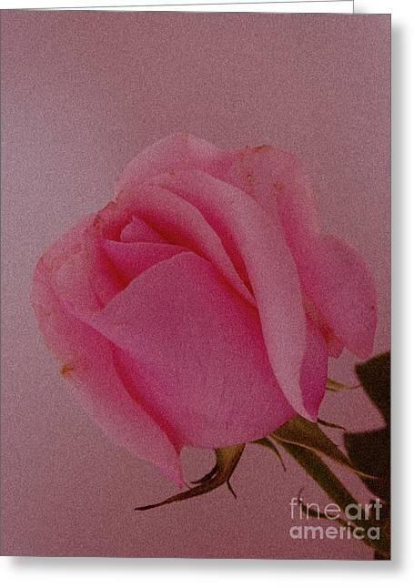 Pink Single Rose Greeting Card