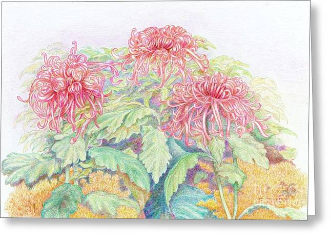 Pink Spider Mums Greeting Card by Frances  Dillon