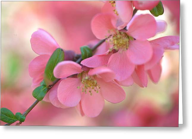 Pink Spring Marvels Greeting Card by Jenny Rainbow
