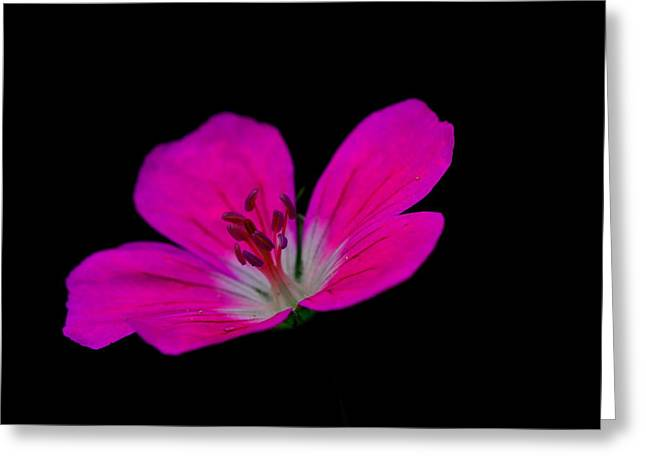 Pink Stamen Greeting Card