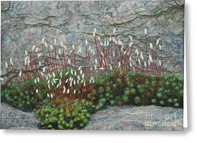 Pink Stony Creek Granite Still Life Study Greeting Card by Cindy Lee Longhini