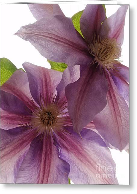 Pink Tenderness Greeting Card by Valia Bradshaw