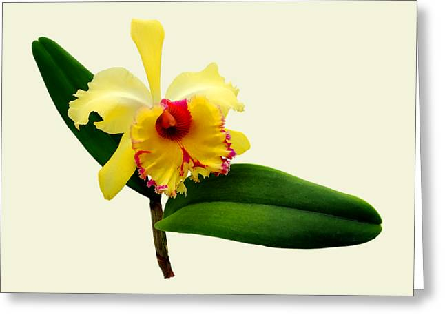Pink Tipped Yellow Orchid Greeting Card