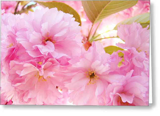 Pink Tree Blossoms Art Prints Spring Blossoms Baslee Troutman Greeting Card by Baslee Troutman