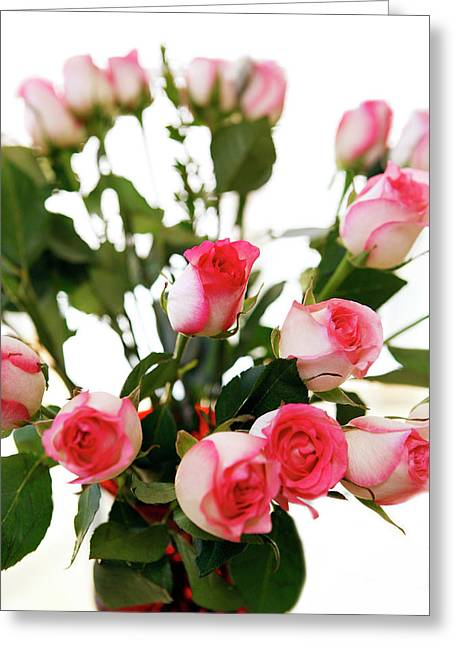 Pink Trimmed Roses Greeting Card by Marilyn Hunt