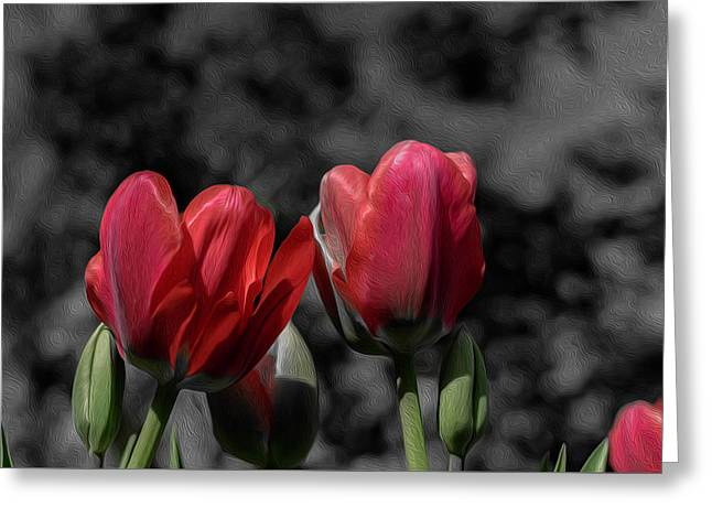 Pink Tulip Pop Greeting Card