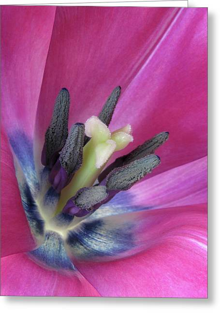 Greeting Card featuring the photograph Pink Tulip Stamens by David and Carol Kelly