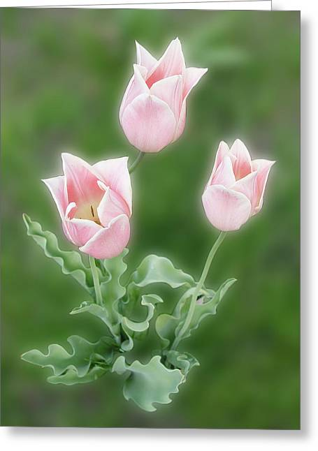 Pink Tulips Greeting Card by Rockstar Artworks