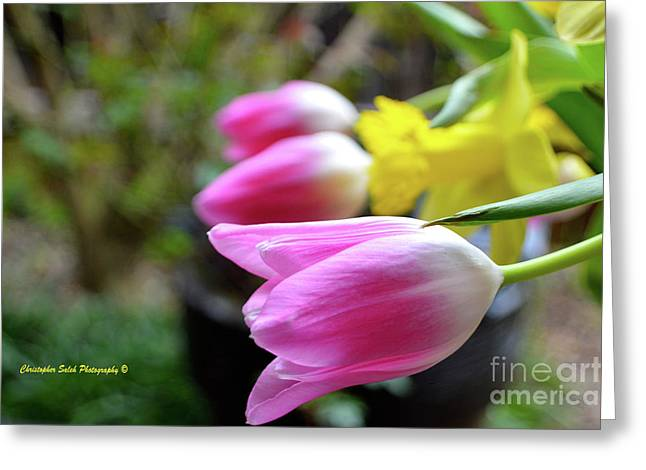 Pink Tulips Row Greeting Card