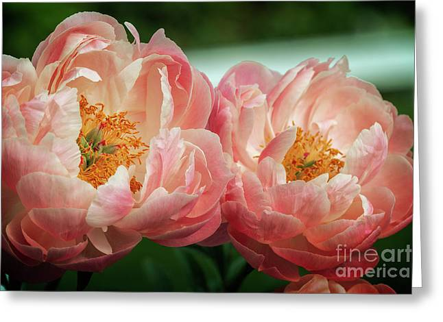 Greeting Card featuring the photograph Pink Twins by Craig Leaper