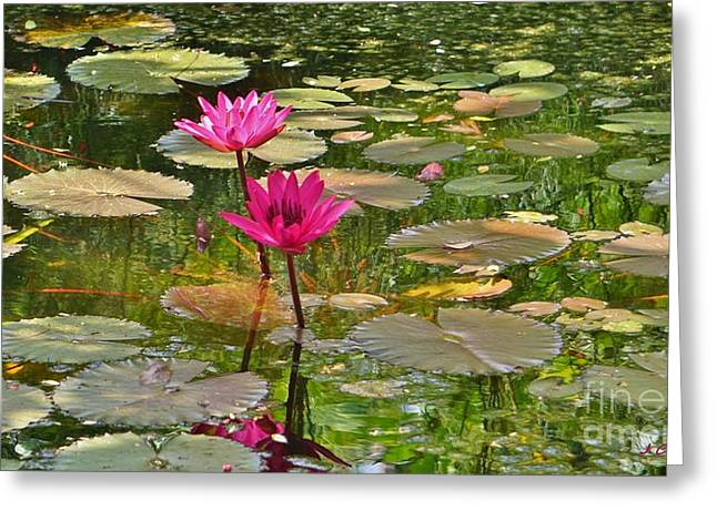 Pink Water Lilies Greeting Card by John Clark
