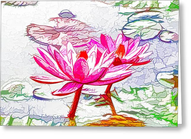 Pink Water Lily Flowers Blooming On Pond Greeting Card by Lanjee Chee