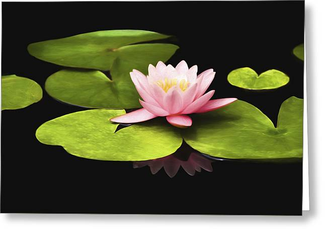 Pink Water Lily Greeting Card by Steven  Michael