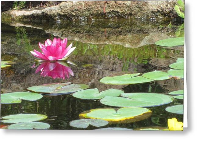Lilly Pads Greeting Cards - Pink Waterlilly  Greeting Card by Laurianna Taylor