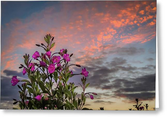 Greeting Card featuring the photograph Pink Wildflowers At Sunset by James Truett