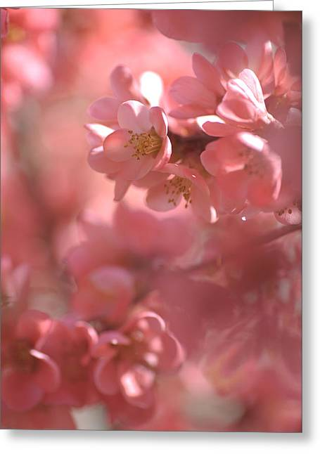 Pink Worlds Greeting Card by Jenny Rainbow