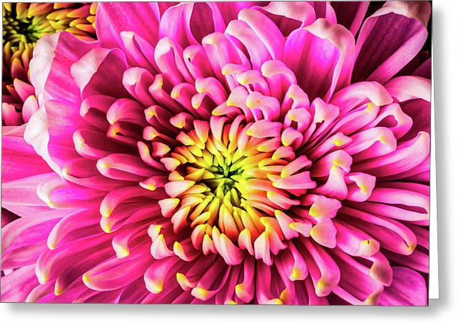Pink Yellow Spider Mum Greeting Card