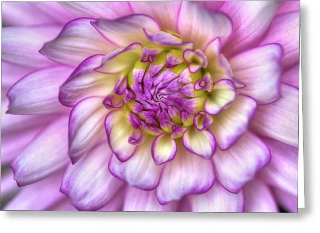 Pink Zinnia Close Up Greeting Card by Mark Kiver