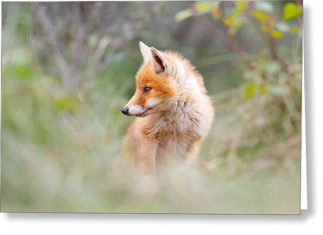 Pinocchio - The Long Nosed Fox Cub Greeting Card by Roeselien Raimond