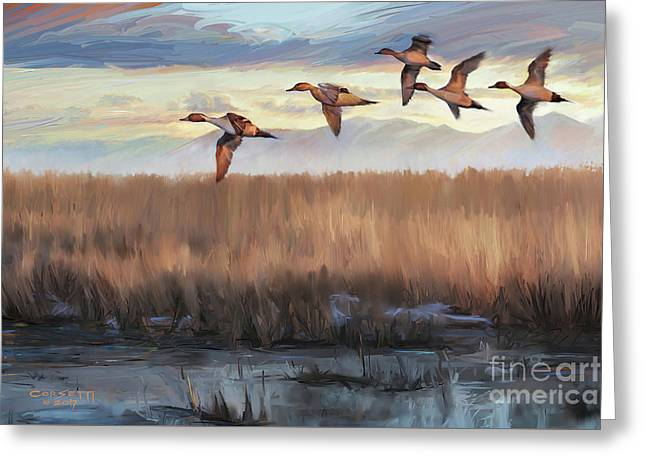 Pintail Fly By Greeting Card by Rob Corsetti