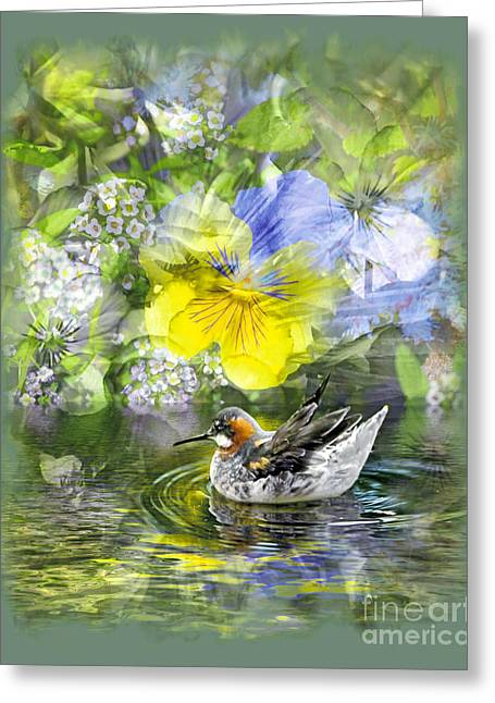 Pintail Pond Greeting Card by Chuck Brittenham
