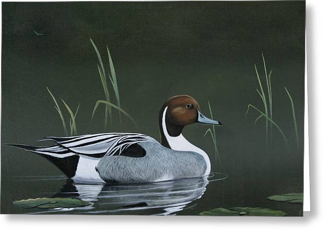 Pintail Portrait Greeting Card by Don Griffiths