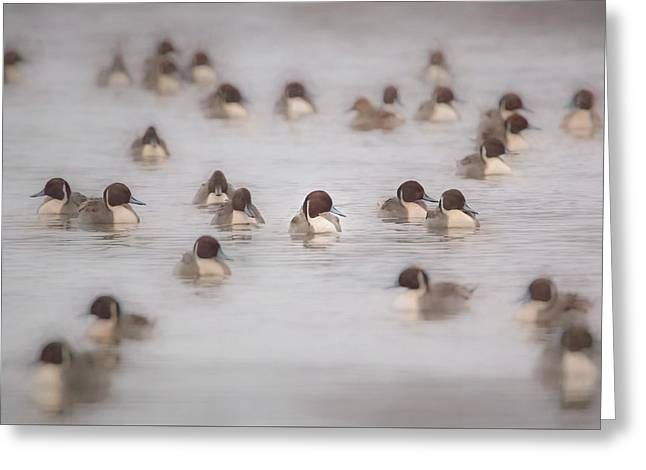 Pintail Repeat  Greeting Card