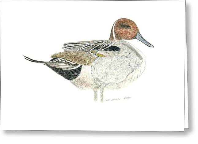 Pintail Greeting Card