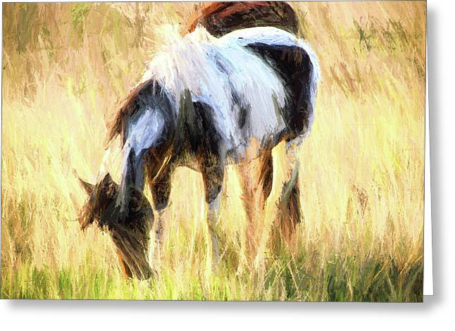 Pinto Grazing Greeting Card